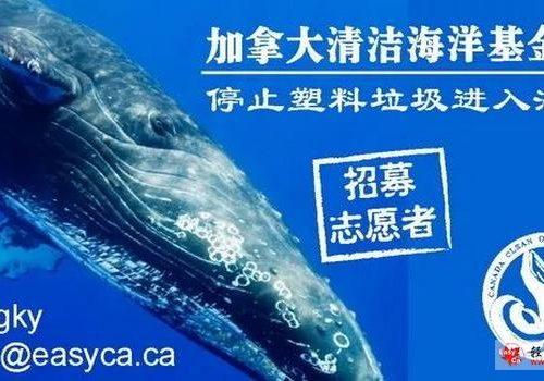 加拿大清洁海洋基金会正式启动!志愿者招募中!